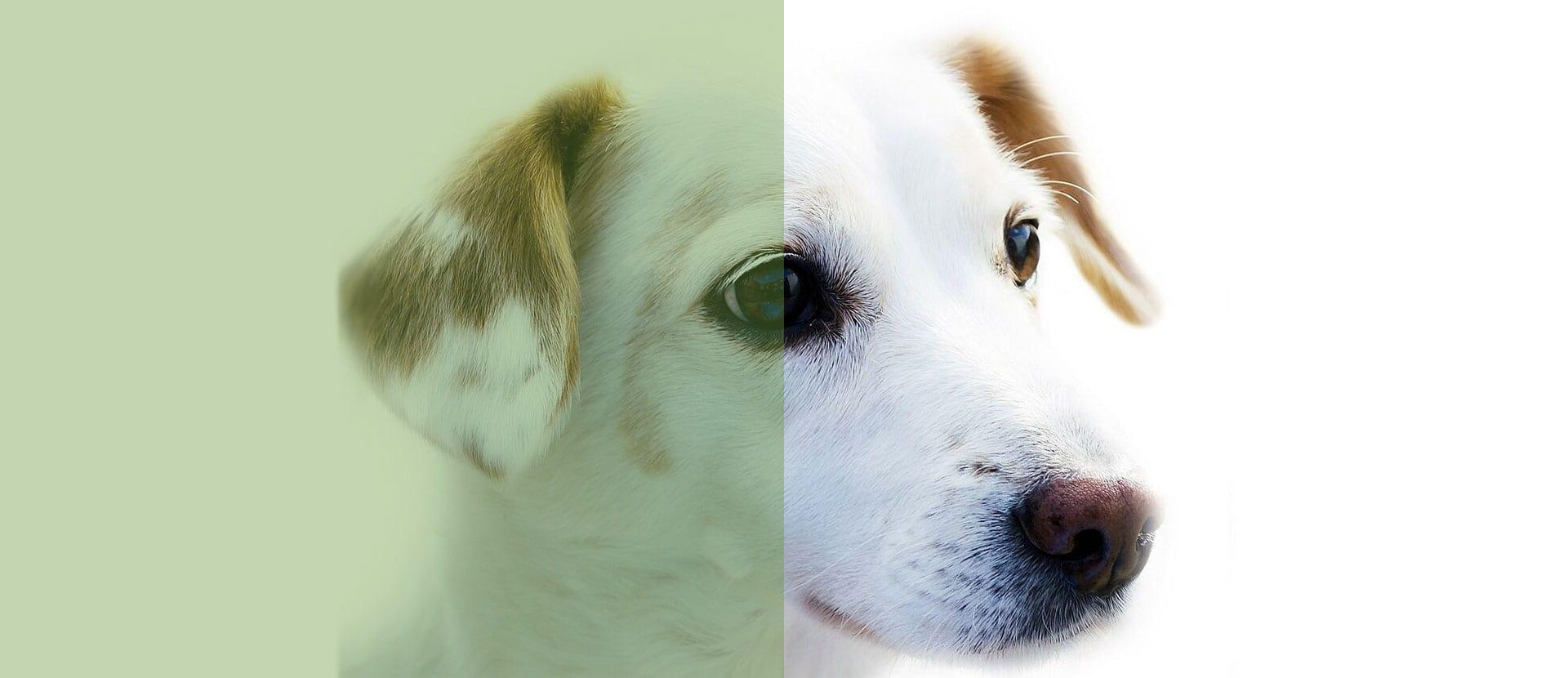 slider med Hund