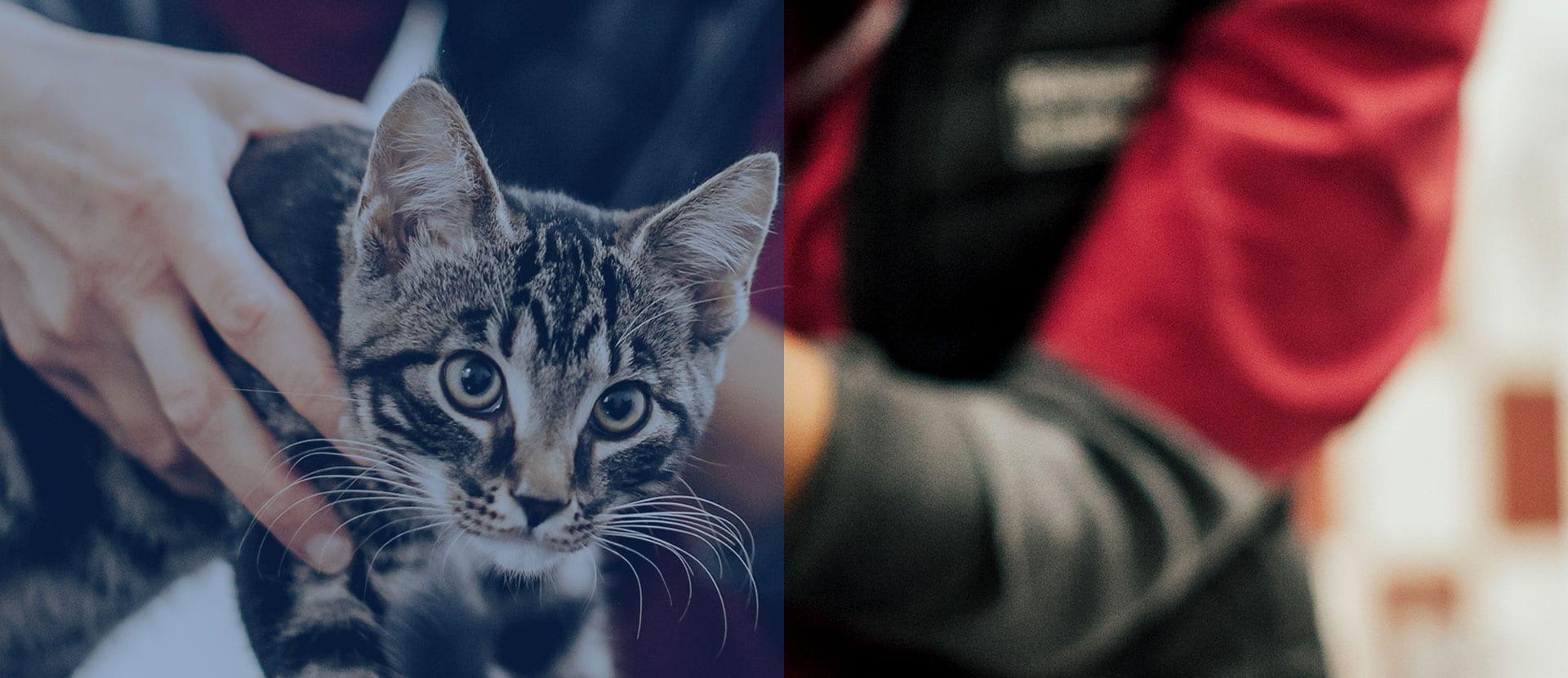 slider med randig katt